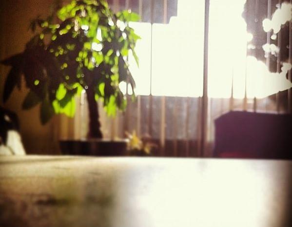 window_blinds